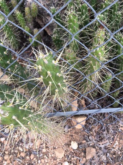 cramim morning hike cactus plants