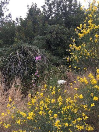 cramim morning hike flora