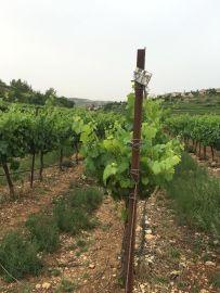 cramim morning hike vineyards