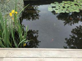 cramim pond area view 2