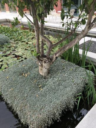 cramim pond area view