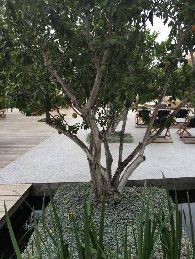 cramim spa pond are with fruit tree