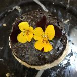 mini cheese cake with crust and edible pansies