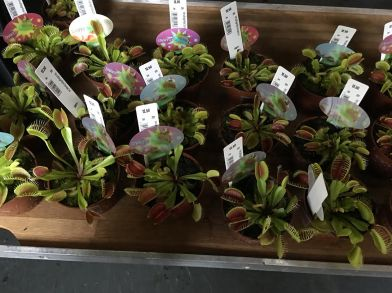 zurich train station florist-venus fly traps